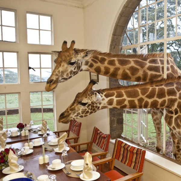 The Giraffe Manor Hotel